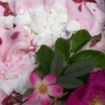Ruusun päivä näkyy Nuijalla
