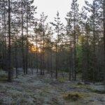 Kaiken kansan metsäkuntoilua