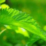 Otavalvattia ja litulaukkaa: villiyrttikurssilla vihreät herkut tutuiksi