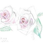 Hempeä nuoruus – ruusu puhuu