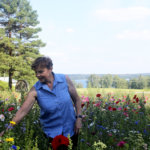Valloittava näky kääntää päitä – Rönnvikin kukkapellolla riittää kävijöitä