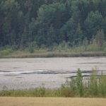 Kasvillisuus peittää lähes koko Vähäjärven – miksi järvi on näin rehevöitynyt?