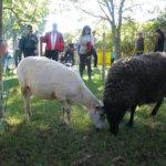 Raikun kyläkoulun maatalousnäyttelyssä pääsee rapsuttelemaan eläimiä