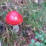 Isla kuvasi metsässä syksyn värejä