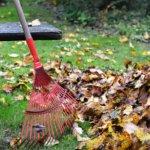 Haravointi, nurmikonleikkuu ja kotipihan sienet – viisi vastausta uusavuttomalle kotipuutarhurille talven kynnyksellä