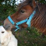 Koiraihmiset toivoivat koiralatuja ja virallista ohjeistusta uimapaikkoihin, hevosväki parempia liikkumisyhteyksiä – eläinaiheisiin kyselyihin vastasi vajaat 600 kangasalalaista