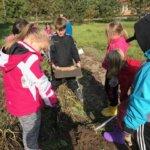Rautajärven koululaiset ovat päässeet maistelemaan omassa perunamaassa kasvaneita perunoita