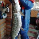 Kalaa Rautajärveltä