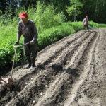 Kompostin sielunhoito – paras paikka kompostille on puolivarjoinen nurkkaus