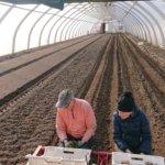 Moldovalaisten ja latvialaisten tulo tilalle jäissä – Niitty-Seppälän Jukka Kittilä: viljelijöitä turha syyllistää siitä, että he suosivat ulkomaista työvoimaa