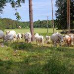 Raudanmaalta keinoja eurooppalaisen maaseudun kehittämiseen