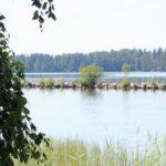 Pakanrannassa ja Aitoon Uusikylän rannassa on havaittu sinilevää