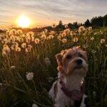 Kesäkuvakisa: Pimu-koira nauttii kesästä