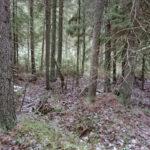 Suden metsä otettiin suojeluun – Luonnonperintösäätiö löysi Pälkäneeltä yhdennentoista luonnonsuojelualueensa Pirkanmaalla