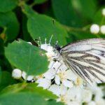 Tuhoja ja tutkimuksia – tuholaiset heikentävät kasvien hyvinvointia