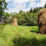 Ite-taidetta – valittuja sanoja pöntöistä, seipäistä, itämisestä ja kovan puun laiturikaiteesta