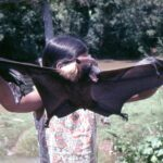 Ainoita nisäkkäitä, jotka osaavat lentää  – salaperäisiä lepakoita voi seurailla esimerkiksi Kaivannossa tai Kyllönjoella