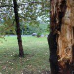 Kirjaston pihapiirin kirsikkapuille tehtiin ikävää ilkivaltaa – tekijä on tiedossa