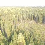 """Metsäisiä ajatuksia: """"Me jokainen pääsemme nauttimaan metsän tuottamasta hyödystä"""""""