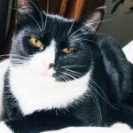 Korona-ajan kotoilu on kasvattanut lemmikkieläinten suosiota – löytöeläintaloihin ja eläinsuojeluyhdistysten hoitoon päätyy vuosittain tuhansia kissoja