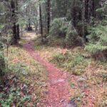 Erakko-Nestorin ja Verkkojärven Matin jalanjäljissä keskelle metsän huminaa ja historian havinaa – testasimme uunituoreen kulttuurireitin Laipanmaassa