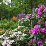 Puutarhataide kohtaa musiikin Arboretum Frickissä Kangasalla