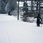 Vastaa kyselyyn: mitä aiot tehdä hiihtolomalla?