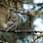 Pirkanmaalla merkittävä osa uhanalaisista lajeista
