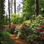 Arboretum Frick avasi ovensa Kangasalan Liuksialassa