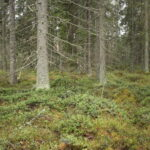 Lukijalta: Mihin Euroopan metsästrategia pyrkii?