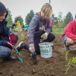 Koululaiset aloittivat Rautajärven kyläkasvimaan kylvöt ja biohiilen käytön