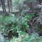 """Pienvesien luonnontilaa ja kunnostamistarpeita kartoitetaan kesällä – """"Pienvesillä on merkittävä vaikutus veden kiertokulkuun"""""""