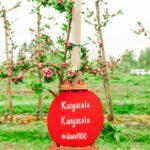 Kangasala sai oman nimikko-omenapuun Ahvenanmaalta