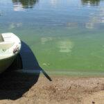 Kangasalan Kirkkojärvessä tehtiin kesän ensimmäinen sinilevähavainto – järvivesi on nyt keskimääräistä lämpimämpää