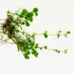 Kasvin keräämisestä – nykyään kasvion voi tehdä myös digitaalisesti