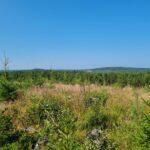 Sydän-Hämeen lakipisteitä metsästämässä – tutkimusmatka alkaa Luopioisista