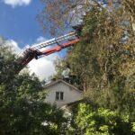 Milloin pelastuslaitos raivaa pihaan kaatuneen puun, entä milloin se on asukkaan oma tehtävä?