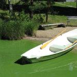 Sinilevä ei hellitä otettaan – havaintoja Kirkkojärven lisäksi muun muassa Mallasvedeltä
