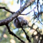 Hämärän hetken orava jakaa mielipiteitä