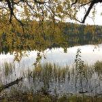 Sinilevähavaintoja tehtiin Pälkäneellä ja Kangasalla monessa järvessä