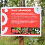 Euroopan liikkujan viikko alkaa–Kirkkoharjun luontoseikkailupolku aukeaa
